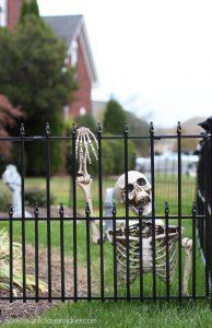 Skeleton halloween cemetery