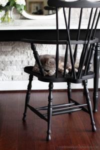 Windsor Chair in Caviar