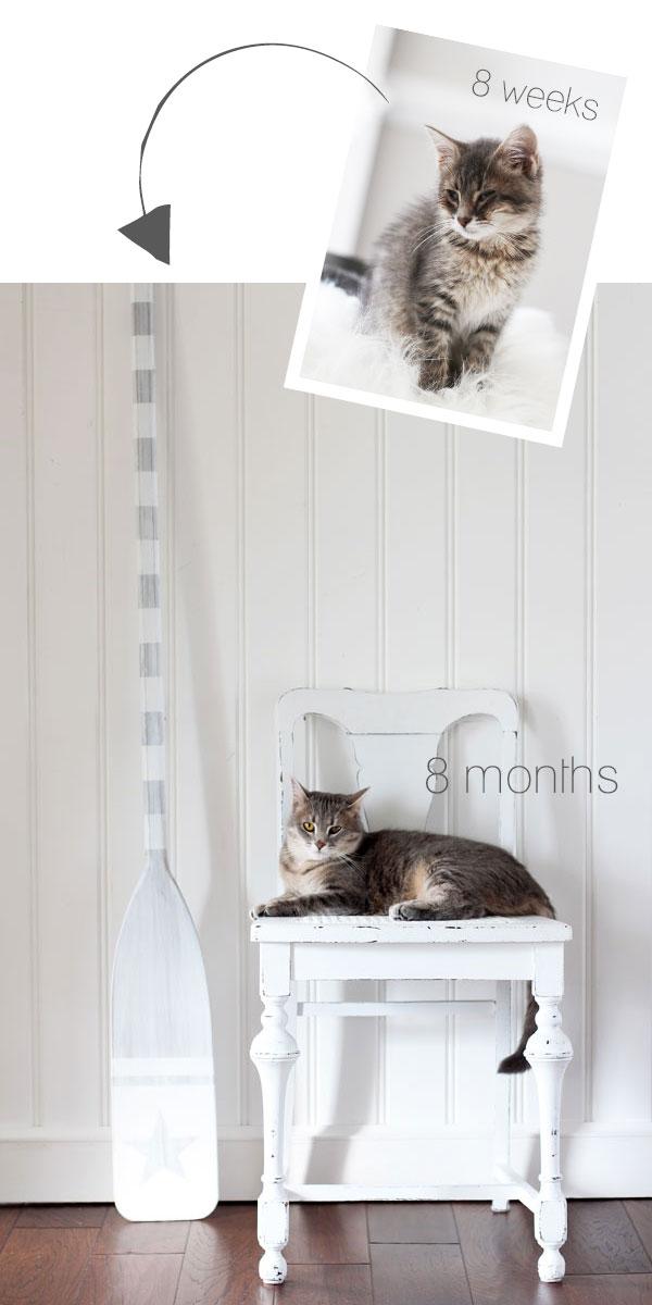 Lyla 8 wks vs 8 months